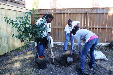 Jericho Road volunteers plant fruit trees in Central City.