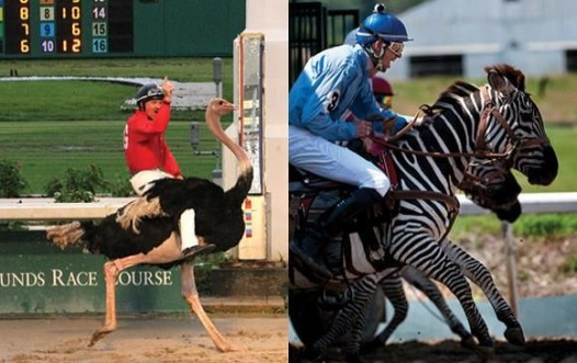 exotic animal race
