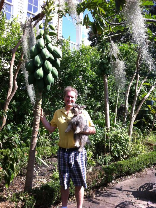 tucker streudel papaya