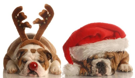 Looks like these guys are ready for Santa Paws on Sunday