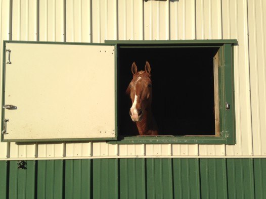 A horse at Cascade Stables, in it's stall for the night.