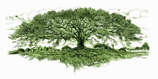 hb tree