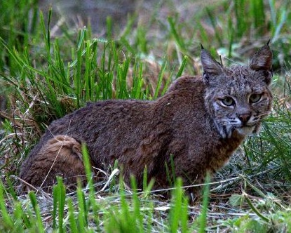 Enquiring wildcats occasionally want to know what's up at Ventana.