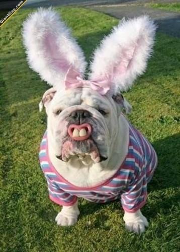 Easter Bully