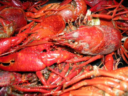 Louisiana_crawfish
