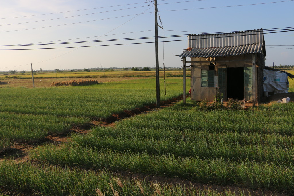 A field of green onions, with a structure typical to the rural areas of the Mekong River delta, late afternoon near the coast. (Photo: Eve Troeh)