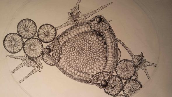 diatoms_smaller-2