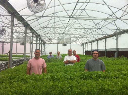 The team at City Greens farm (Photo: City Greens)