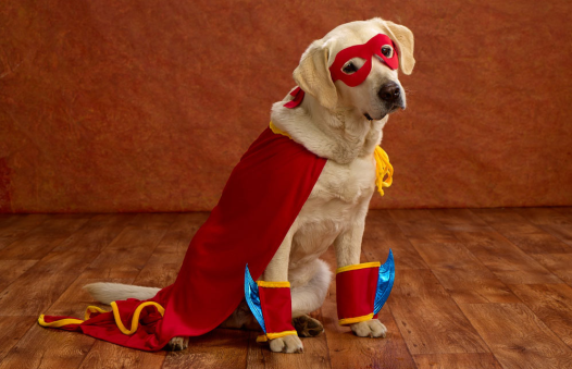 Super(dog)hero: A cape goes a long way in New Orleans. In any size.
