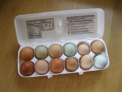 Calvin's eggs