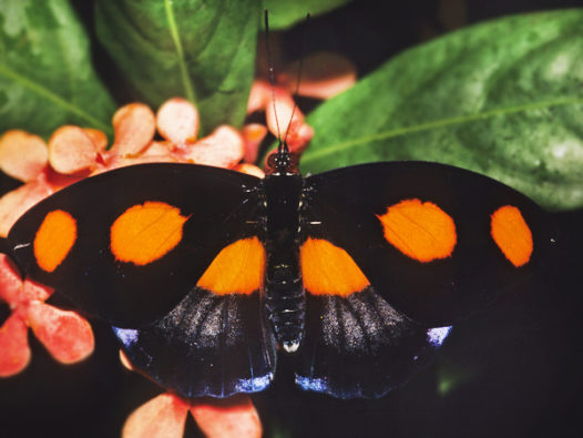 Bugs and New Orleans: It must be termite swarm season – Via Nola Vie